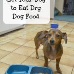 Picky dog? Check out these 5 tips how to get your dog to eat dry dog food #ad #collectivebias #proplanpet