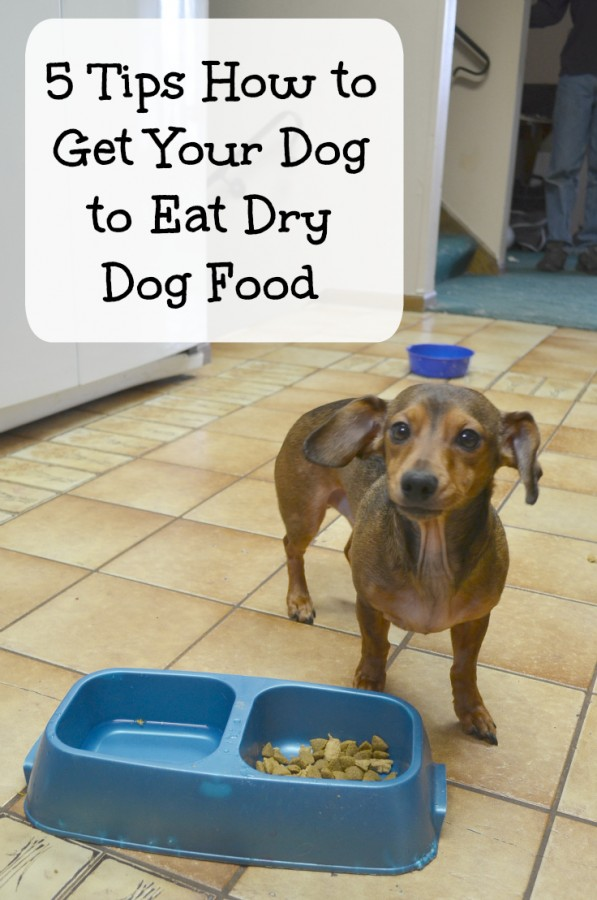 Picky dog? Check out these 5 tips how to get your dog to eat dry dog food