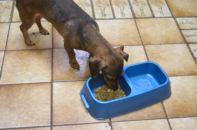 5 Tips How to Get Your Dogs to Eat Dry Dog Food