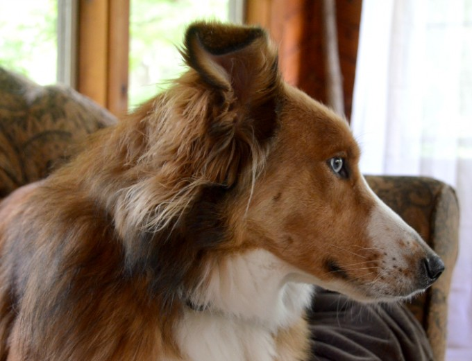 Pets are an awesome addition to any family. Check out five ways pets keep you sane :) #ad