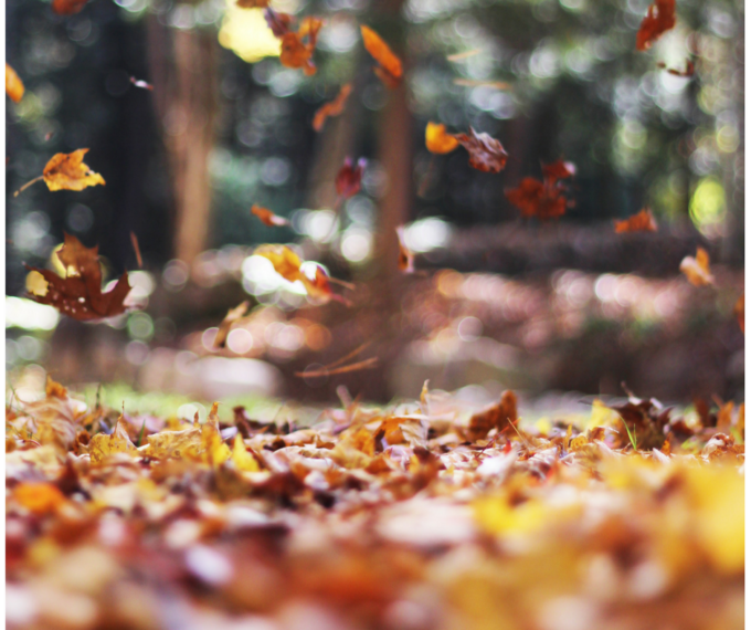 Fall is here and it's time to clean your home and get it ready for winter. Check out these fall cleaning tips for more!